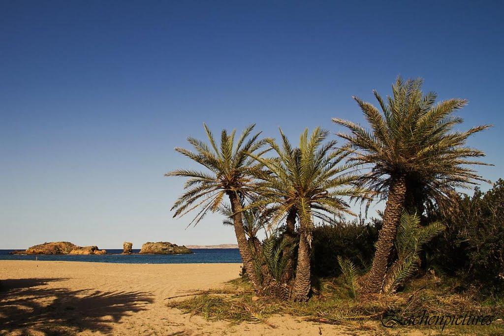 Το ελληνικό φοινικόδασος με την εξωτική παραλία που είναι το μοναδικό στην Ευρώπη!