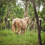 Itinéraire dans la province du Seibo en Rép. dominicaine, à la découverte de Higüey et des chevaux «de Paso higüeyano»