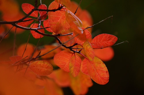DSC06953_red_leaves_feb14