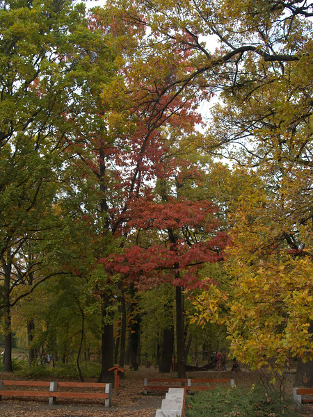 The Beutiful colors of fall