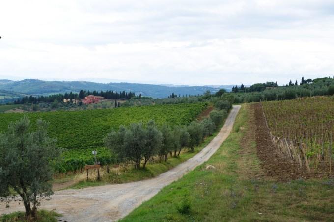 TuscanyVineyard