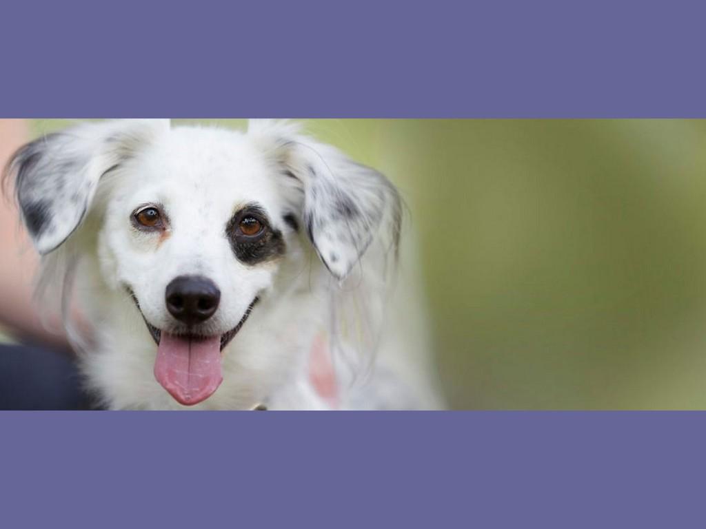 Un chien qui veut faire du dog-dancing © Petfinder