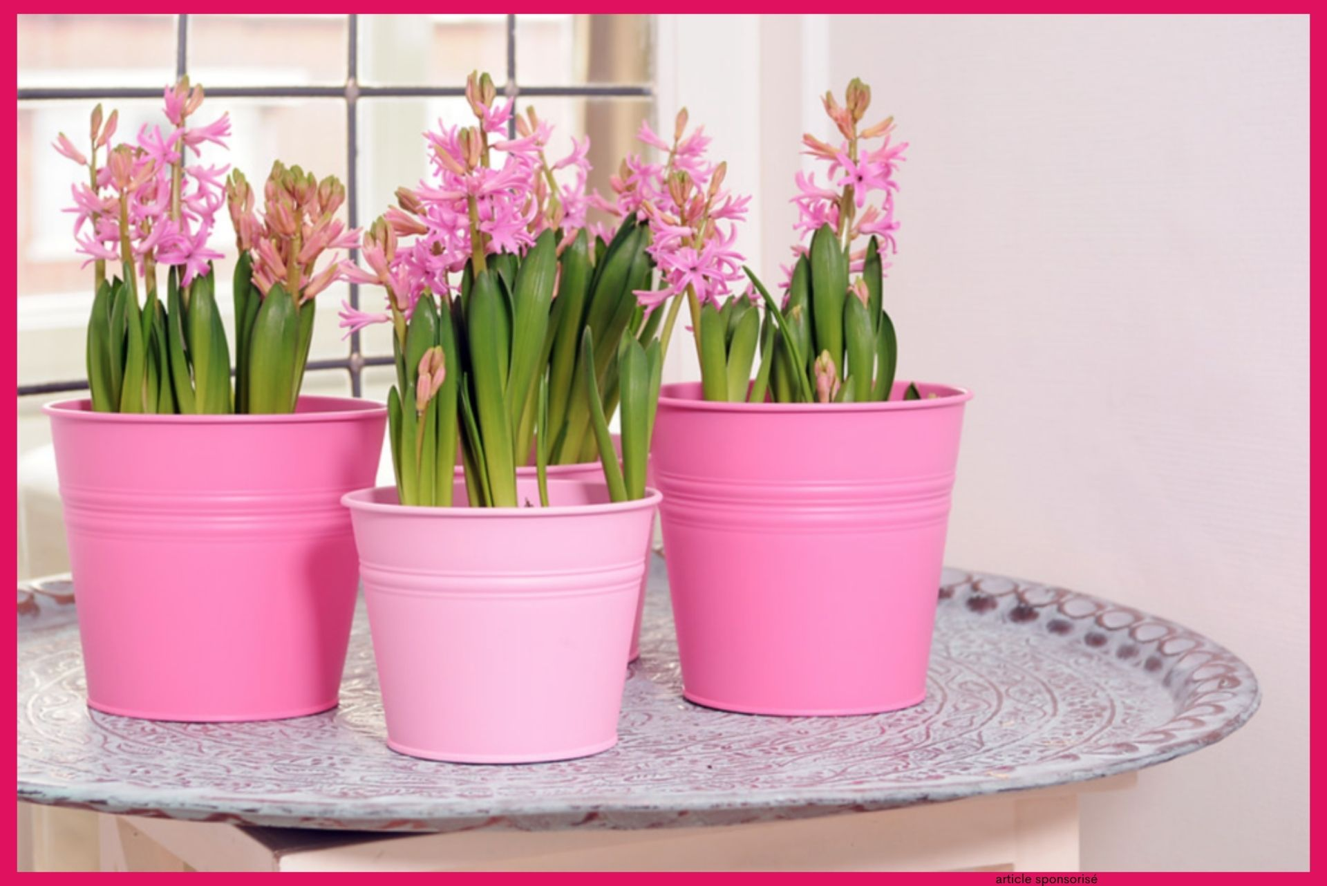 Cultiver des bulbes à fleurs en pots et en jardinières
