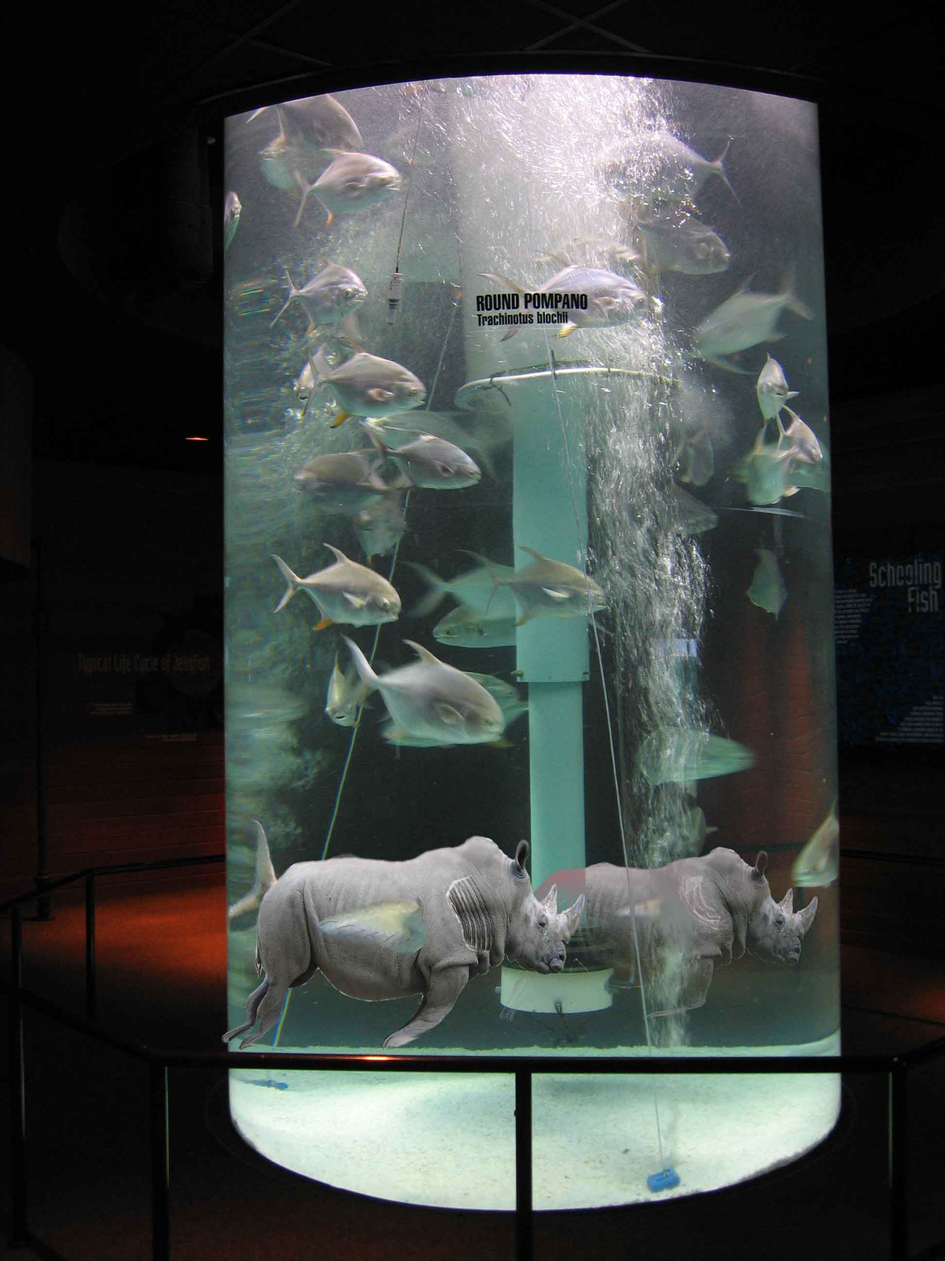 Fish in tank swimming - Fish In Tank Swimming