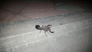 Oman doesn't seem to be the best place for one who doesn't like bugs...