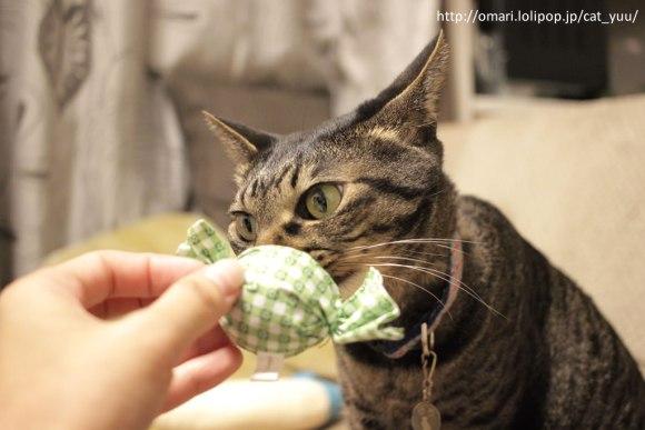キャンディ型おもちゃのニオイをかぐキジトラ猫のゆう その2