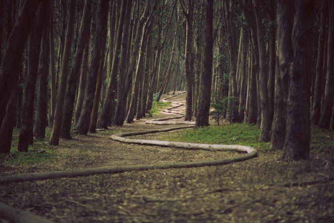 un bosque con una raíz en la superficie que serpentea a lo largo del camino