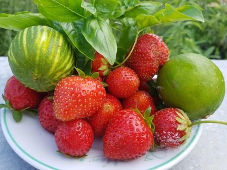 Les fraises du jardin