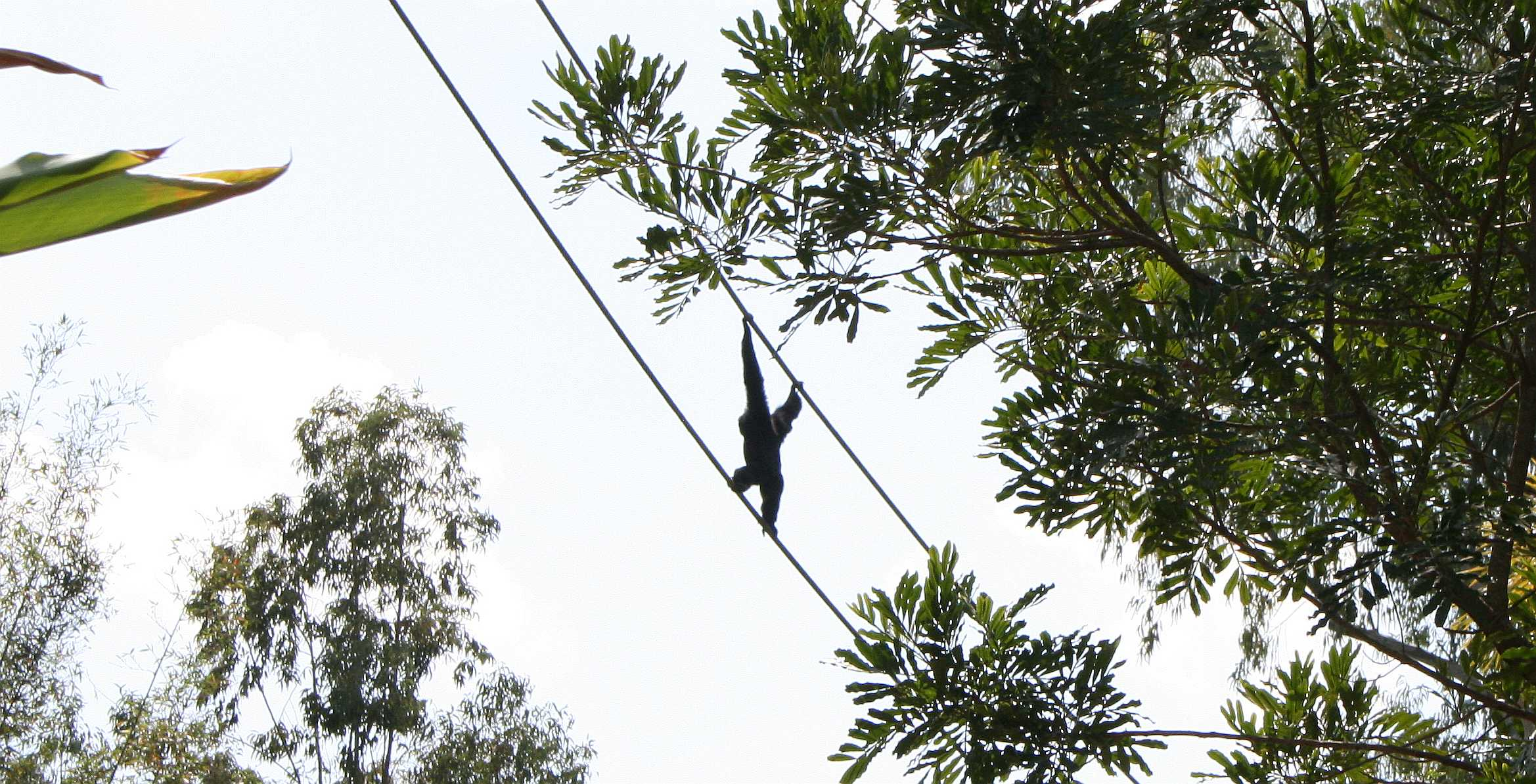 img_0182-monkey-on-wire-1