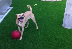 OmegaTurf dog ball turf