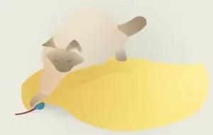 rato-escondido