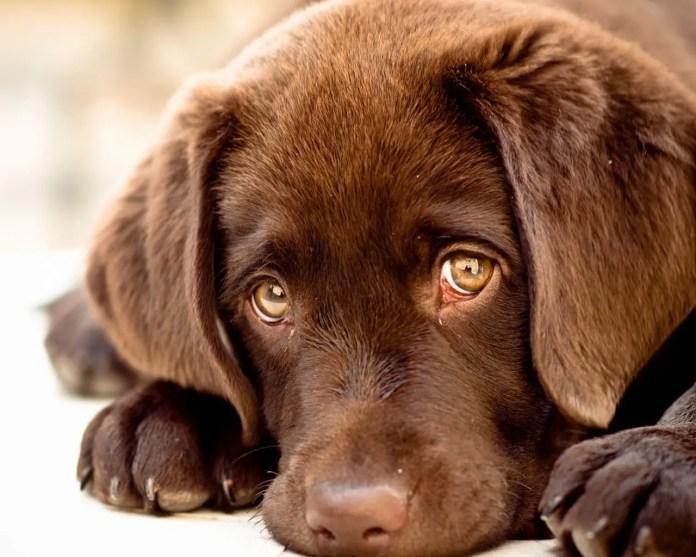 innocent puppy eyes