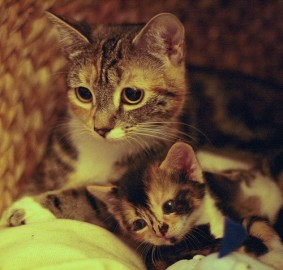 mother_and_kitten_10