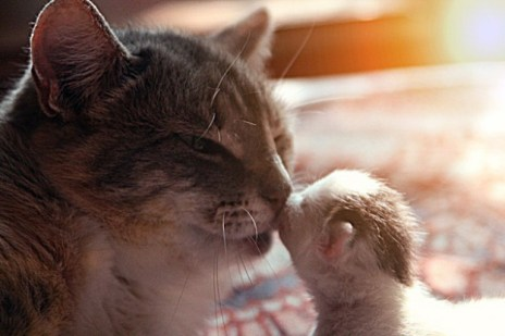 mother_and_kitten_24