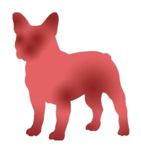 dermatite-atopica-canina-áreas-afectadas