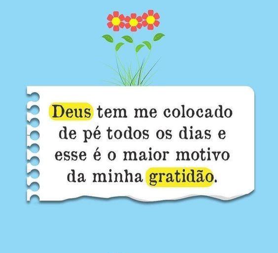 frases da gratidão vida todas