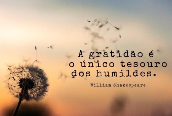 frases da gratidão vida impressionante