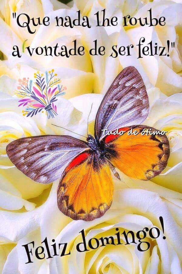 Bom Dia Feliz Domingo Especialmente para Você.
