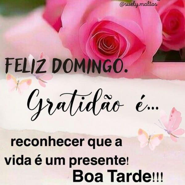 Frase de gratidão e boa tarde domingo