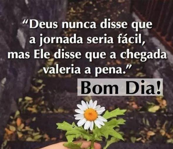 Frase de bom dia com flor