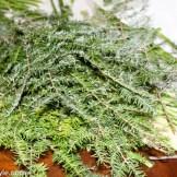 Evergreen Cuttings for Vase Filler