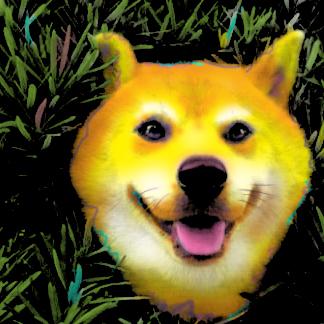 Shiba Inu Pop Art Portrait