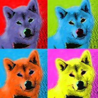 Shiba-Inu-Pop-Portrait