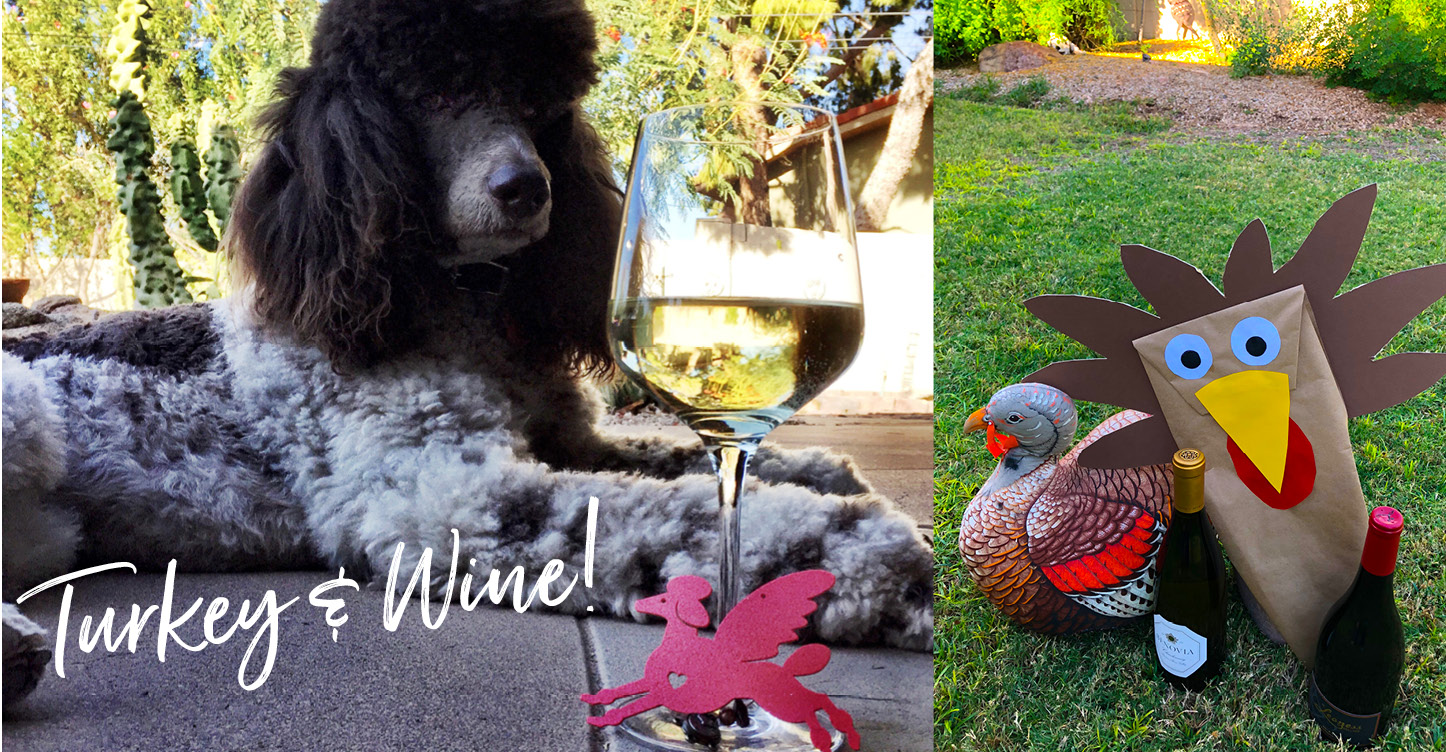 Wine Suggestion photo with Poodle
