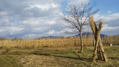 西の湖園地_冬