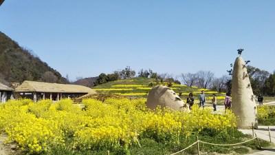 ラコリーナ近江八幡_菜の花