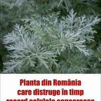 Planta din România care distruge în timp record celulele canceroase