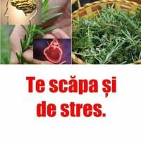 Cea mai puternică plantă, bună pentru creier, inimă, vase, piele, păr și siluetă. Te scăpa și de stres. Spune-le și prietenilor tăi: