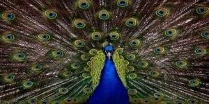 Simetrija v naravi