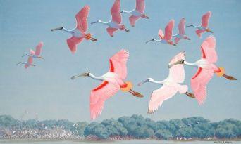 Roseate Spoonbills - Lukisan Walter Weber di National Geographic