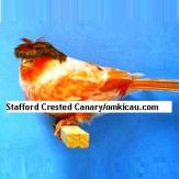 Stafford Crested Canary