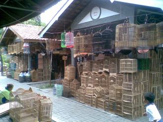 Foto-foto sudut, lorong dan hewan peliharaan yang dijajakan di Pasty Jogja (11)