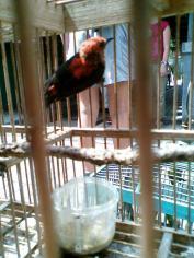 Foto-foto sudut, lorong dan hewan peliharaan yang dijajakan di Pasty Jogja (18)