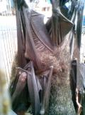 Foto-foto sudut, lorong dan hewan peliharaan yang dijajakan di Pasty Jogja (22)