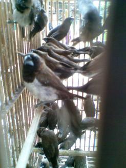 Foto-foto sudut, lorong dan hewan peliharaan yang dijajakan di Pasty Jogja (24)