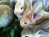 Foto-foto sudut, lorong dan hewan peliharaan yang dijajakan di Pasty Jogja (26)