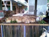Foto-foto sudut, lorong dan hewan peliharaan yang dijajakan di Pasty Jogja (28)