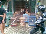 Foto-foto sudut, lorong dan hewan peliharaan yang dijajakan di Pasty Jogja (34)