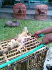 Foto-foto sudut, lorong dan hewan peliharaan yang dijajakan di Pasty Jogja (43)