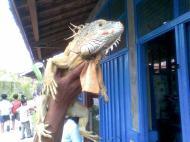 Foto-foto sudut, lorong dan hewan peliharaan yang dijajakan di Pasty Jogja (44)