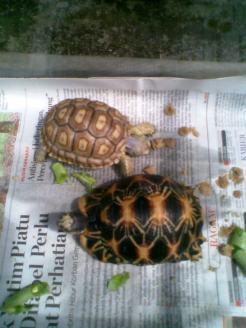 Foto-foto sudut, lorong dan hewan peliharaan yang dijajakan di Pasty Jogja (51)