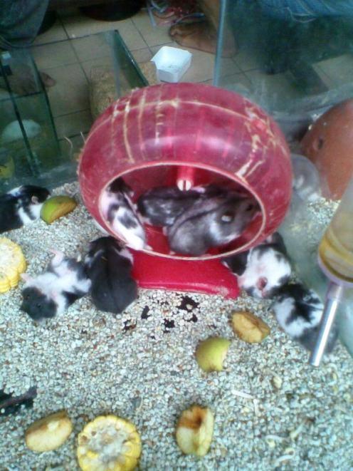 Foto-foto sudut, lorong dan hewan peliharaan yang dijajakan di Pasty Jogja (53)
