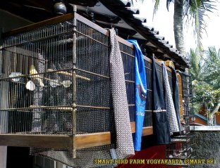 Gambar-gambar lab penangkaran burung kenari SmartBF (4)