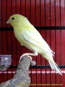 Gambar-gambar lab penangkaran burung kenari SmartBF (40)