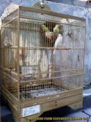 Gambar-gambar lab penangkaran burung kenari SmartBF (5)