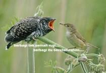 Yuk berbagi untuk sesama penghobi burung